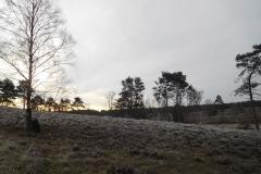 Heidschnuckenweg im Winter 2019