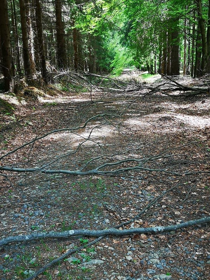 Trail-Gefühl beim FichelbergUltra