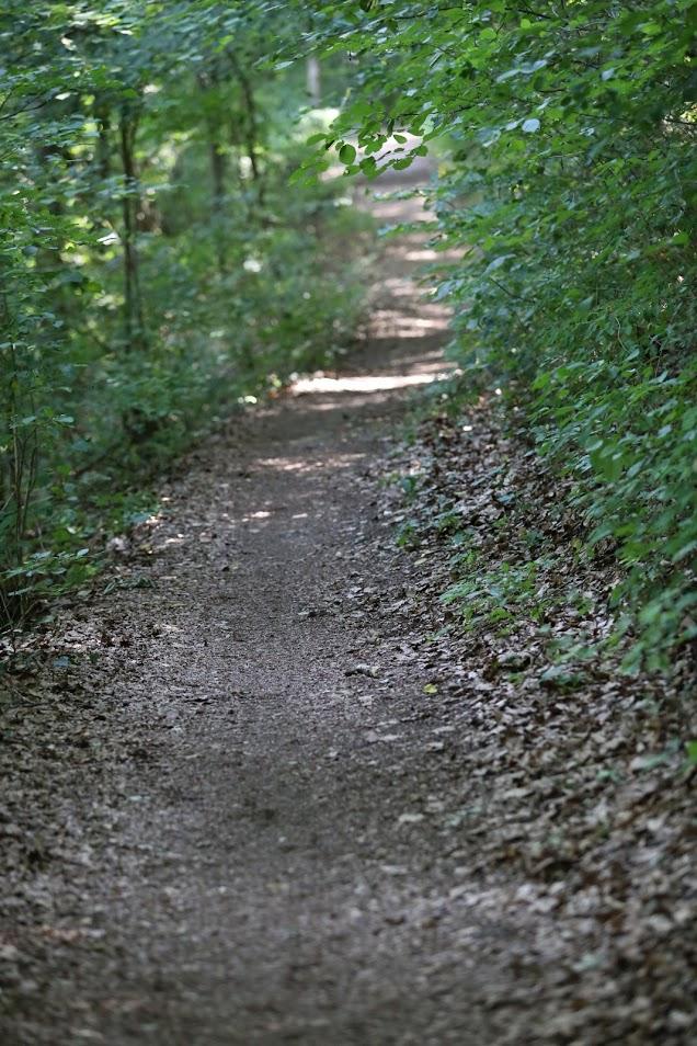Maintal Ultratrail - viele Trails, viel Wald, viel Abwechslung (c) mtut.de / A. Bleichner