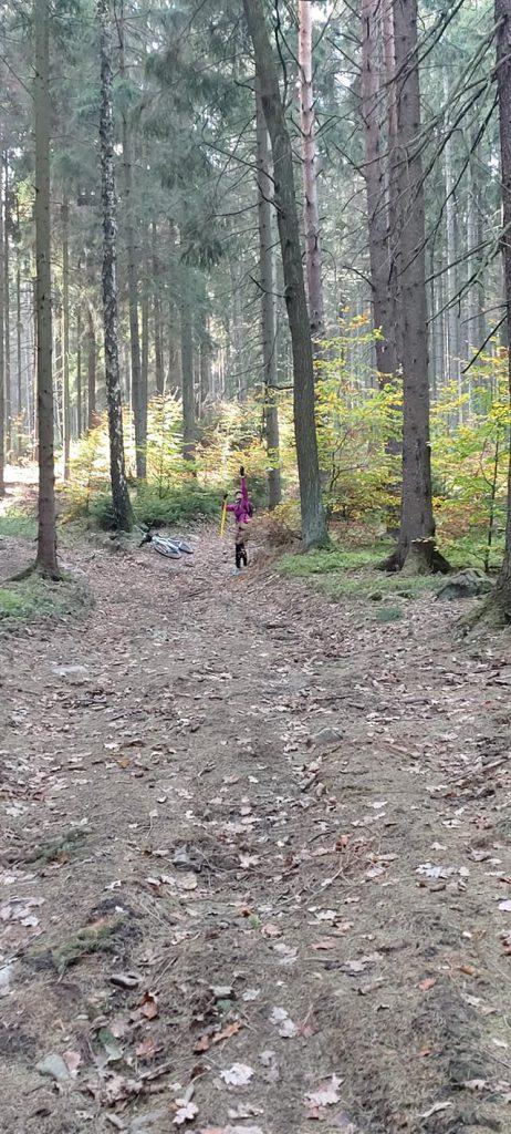 Viel Wald und gut zu  laufen (c) Oberlausitztrail