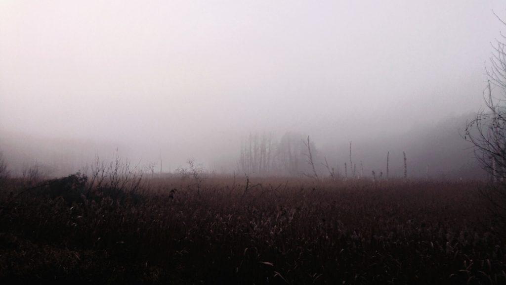 Herbstlauf in der Schorfheide - so karg, so schön