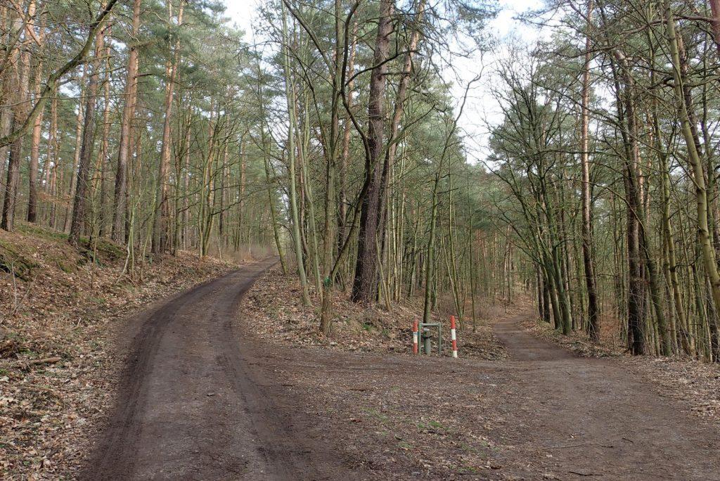 Der Grunewald hat durchaus Kurven und Hügel (c) Triathlongemeinschaft Sisu Berlin