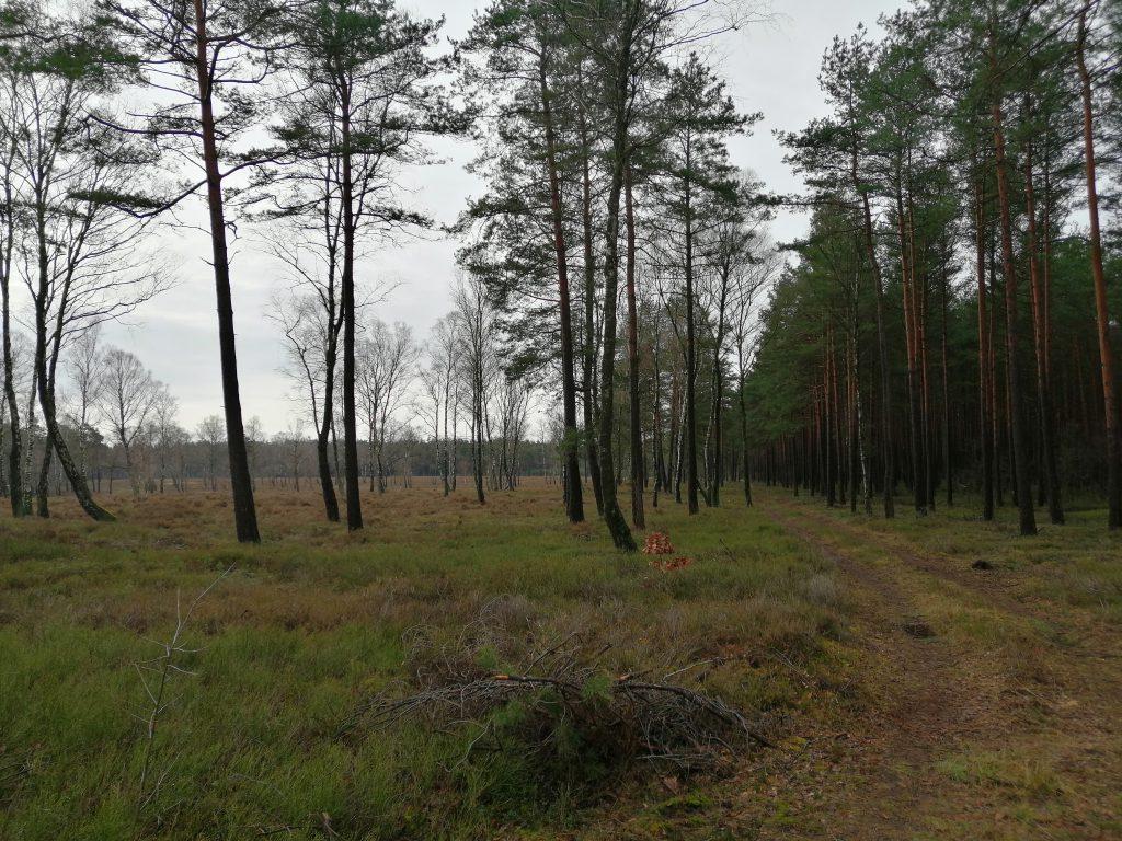 Lüneburger Heide - ein Lauf-Traum (c) R. Margerie